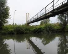 В Саранске расследуют причины массовой гибели рыбы на реке Инсар