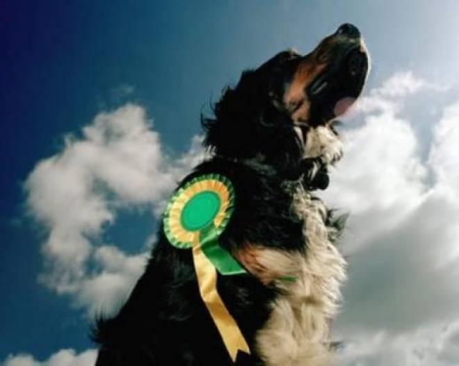 В Саранске состоится выставка собак