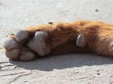 В Саранске неизвестные перерезали горло собаке