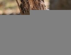 С начала года в Мордовии незаконно вырубили 189 «кубов» леса