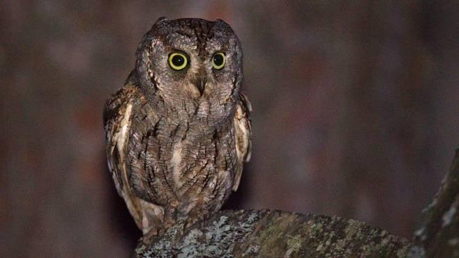 В национальном парке «Смольный» нашли гнездо сплюшки