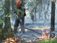 На охрану лесов Мордовии от пожаров заложено 23 миллиона рублей