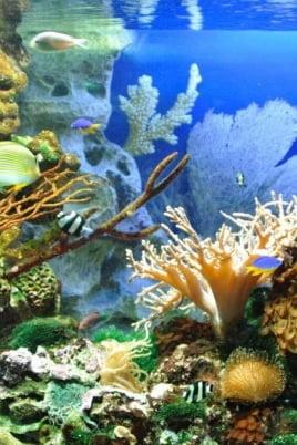 Загадочный мир океана постер