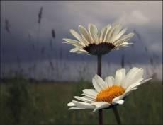 Сегодня в Саранске будет накрапывать дождь
