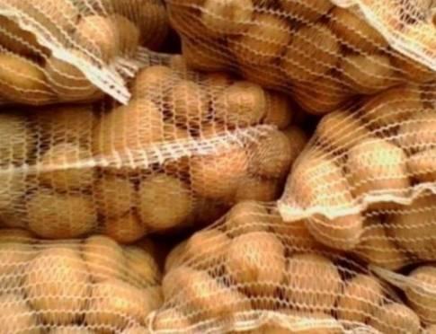 В Мордовию завезли картофель из карантинной зоны