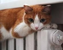Очень скоро в квартирах жителей Саранска станет теплее