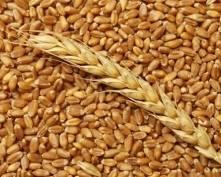 Мордовия: миллион тонн зерна собран