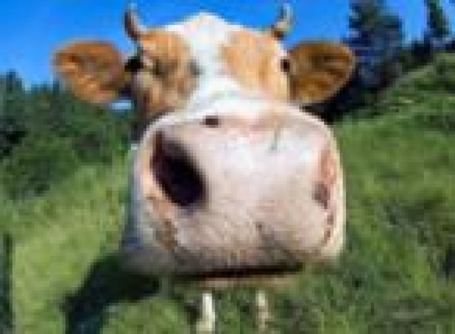 В Мордовии выберут лучшее молочное хозяйство республики
