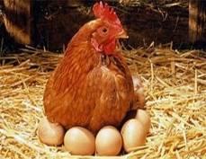 Жителям Саранска предложат 300 тонн сахара и 2000 яиц