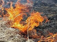 В Мордовии девочка попала в больницу после сжигания сухой травы