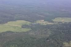 Авиаразведка доложила, в мордовских лесах спокойно