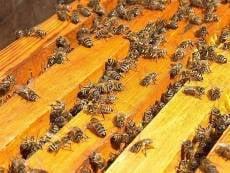 Пчеловоды расскажут жителям Саранска о тонкостях своего дела