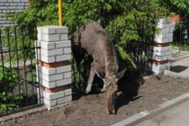В Саранске лесной обитатель нашел смерть на участке частного дома