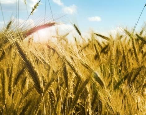 Мордовия сможет получать больше урожая