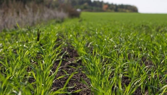В Мордовии на треть выросла урожайность зерновых