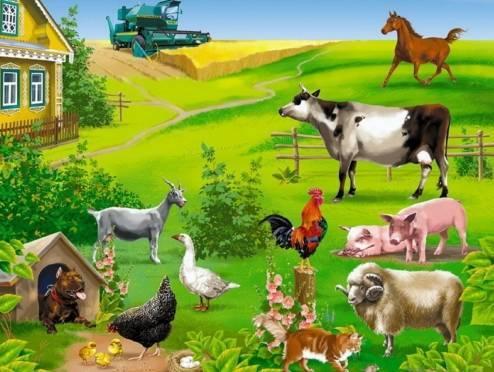 В Мордовии бизнес-леди намерена завлечь туристов в своё фермерское хозяйство