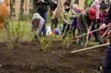 В Саранске посадят около 2 тысяч деревьев