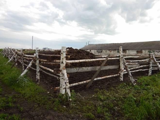 Украденную в Мордовии пару лощадей продали за 100 тысяч рублей