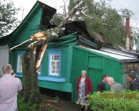 В Саранске будут удалены все аварийные деревья