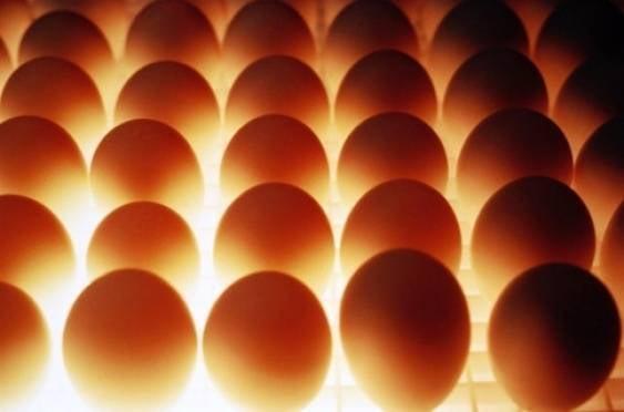 В Мордовии на одного жителя производят 1,5 тысячи яиц