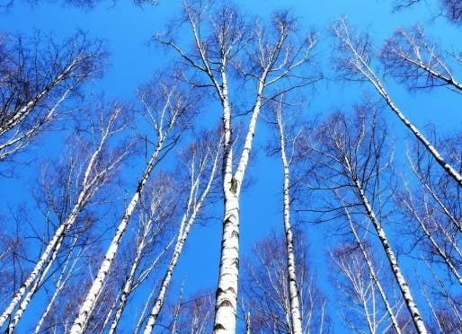 В Мордовии мартовская погода потянула на несколько рекордов