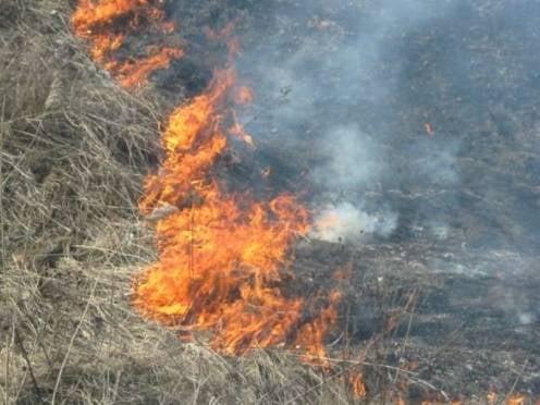 На выходных пожарные Мордовии тушат траву