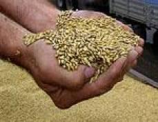 Аграрии Мордовии планируют собрать более полутора миллионов тонн зерна