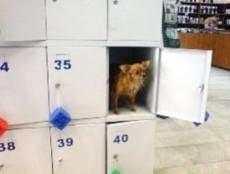 В Саранске из ячейки супермаркета украли сумку