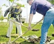Работники «Мордовэнерго» внесли свой вклад в озеленение Саранска