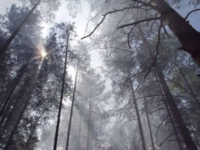 Беспрепятственно попасть в лес жители Мордовии смогут только в сентябре