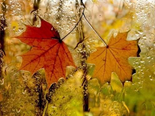 Октябрь в Мордовии начнётся с дождей