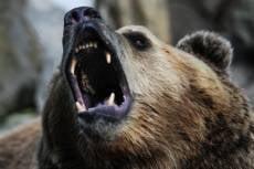 В Мордовии браконьеры  убили редкого медведя