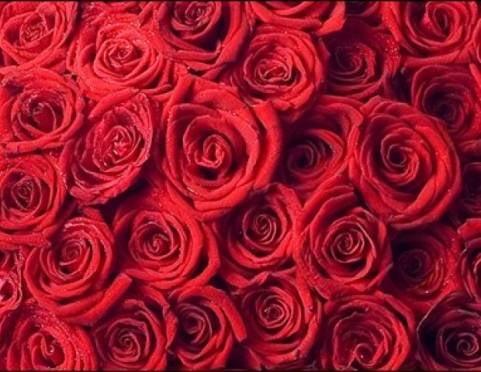 Мордовия будет производить миллион-миллион алых роз