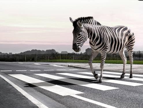 В Мордовии объявлена «охота» на ленивых пешеходов