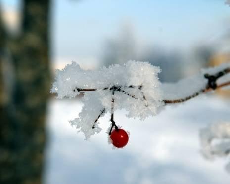 Саранск начинает готовиться к сюрпризам зимы