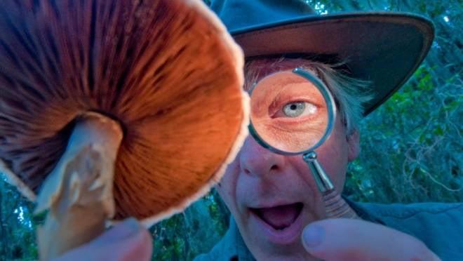В Мордовии четыре человека отравились грибами