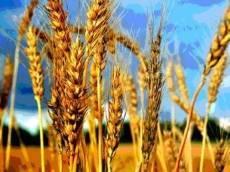 15 агропредприятий представят Мордовию на «Золотой осени-2013»