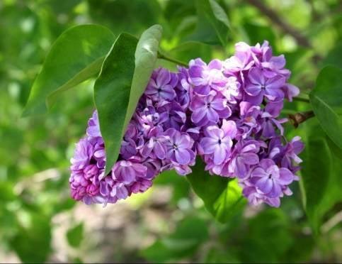 В Мордовию идёт настоящая весна