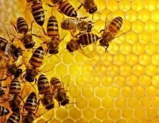 В Саранске выберут самый правильный мёд