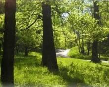 В Мордовии зашумят новые дубравы