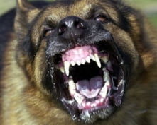 В Мордовии собаки до смерти искусали женщину