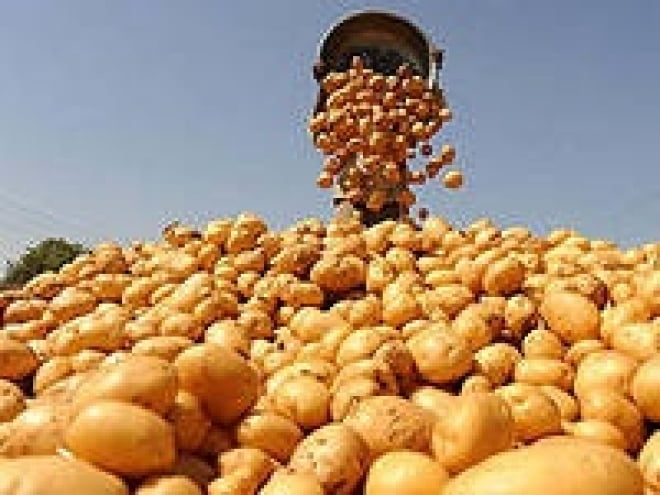 Аграрии Мордовии соберут рекордный урожай картофеля