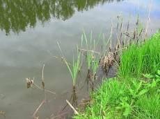 В Мордовии нетрезвый рыбак утонул на мелководье