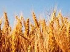 Зерновой фонд Мордовии может сгореть
