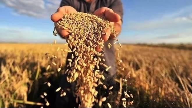 Аграрии Мордовии представят свои достижения на «Золотой осени»