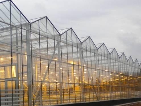В Мордовии планируют построить крупный тепличный комплекс