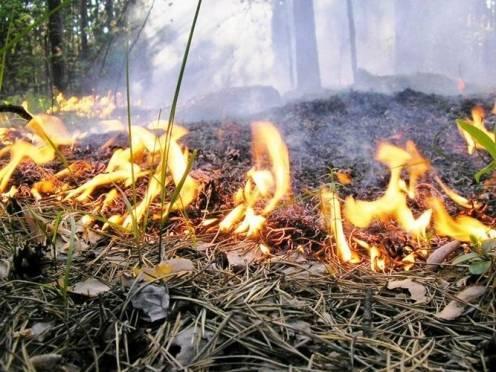 В Мордовии прогнозируется наивысший класс пожароопасности