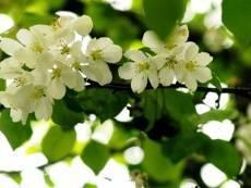 9 мая в Мордовии будет тепло и ветрено