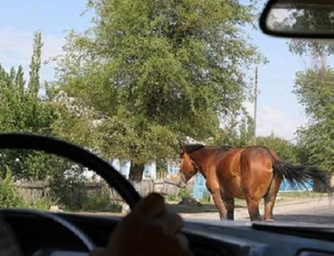 В Мордовии восьмиклассница на лошади врезалась в «Тойоту»