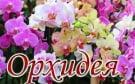 Цветочный салон «Орхидея»